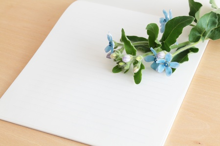 Letter paper with blue flowers photo