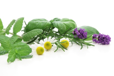 botanical remedy: Mixed Herbs on white background
