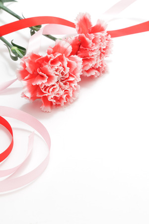 Red white carnation and ribbon isolated on white background Stock Photo