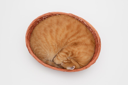 cat sleeping: Ginger cat sleeping in basket