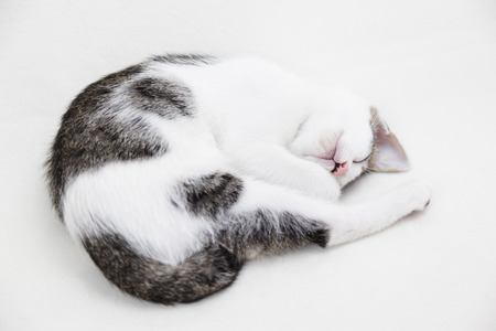 curled: Cute kitten curled up asleep on white background