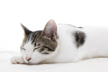 Cute kitten sleeping on white background