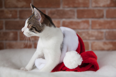 moggy: Cute kitten sitting in christmas cap Stock Photo