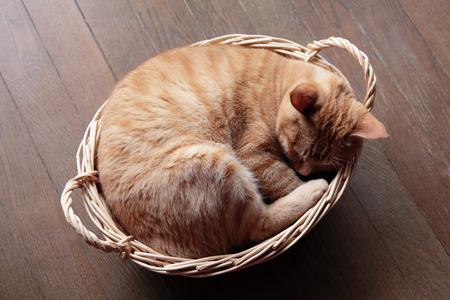 Gember kat slapen in de mand