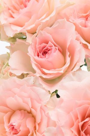 arreglo floral: Antecedentes de rosas rosas