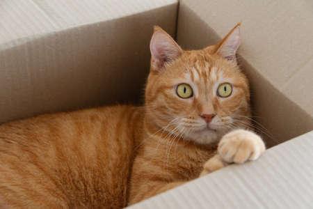 Cat in a cardboard box Banco de Imagens