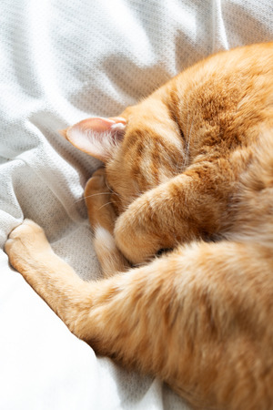 Ginger cat sleeping on bed Imagens