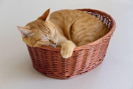 Ginger cat sleeping in basket