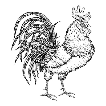 tatto: Hand drawn rooster on white background. Oriental zodiac. Symbol 2017. Rooster animal. Editable vector illustration.