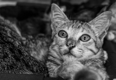 moggy: Tabby cat open big eye Stock Photo