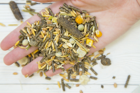 Pet care and feeding concept. A hand with rodent or rabbit food- whole grains and seeds and green veggies against white wooden background, close up.