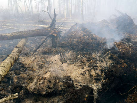 Peatlands are on fire. Forest fire and its consequences 免版税图像