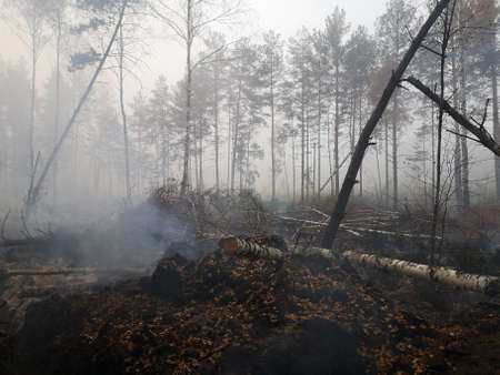 Peatlands are on fire. Forest fire and its consequences Banque d'images