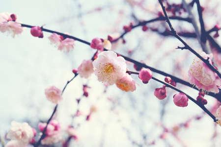 thriving: pink Flower