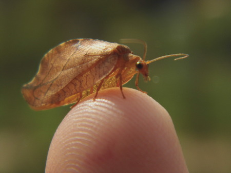A small brown colored butterfly resting on the tip of a humans finger Stock fotó