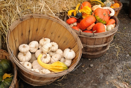 Baskets of gourds surround bales of hay at a New England family farm roadside stand.