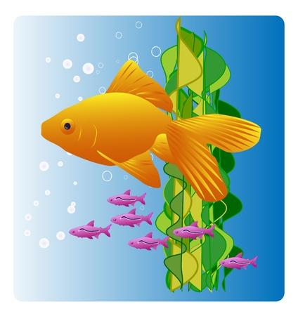 Sunny oranje goudvissen zwemmen in blauw water met bubbels en zeewier. Heldere en kleurrijke vector illustratie. Stock Illustratie