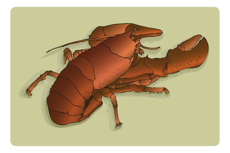 Bright red lobster on sandy background, 7-layer vector- line art, color, markings, everything on individual layers to make editing fast and easy. Stok Fotoğraf - 11976640