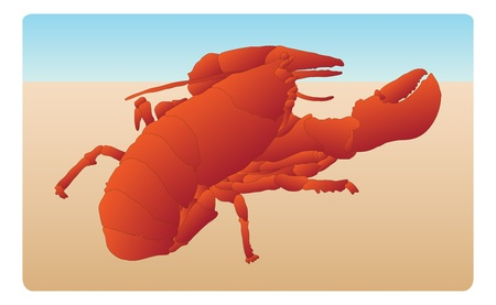 aquaculture: Bright red lobster on sandy background, line art, color, markings, everything on individual layers to make editing fast and easy. Illustration