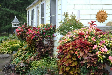 Fall foliage and cottage mums Stock Photo