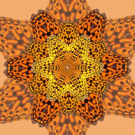 A photo of a live butterfly becomes a delicate kaleidoscopic image Stock Photo