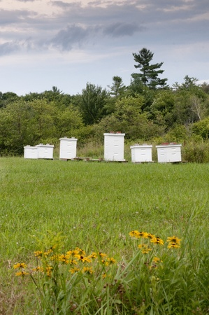 Bee hive boxes Stock Photo