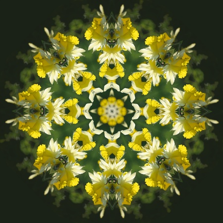 A hillside of colorful daffodils becomes a bright and delicate kaleidoscope pattern Stock Photo