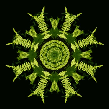 Lacy sunlit fern fronds become a bright and delicate kaleidoscope pattern Stock Photo