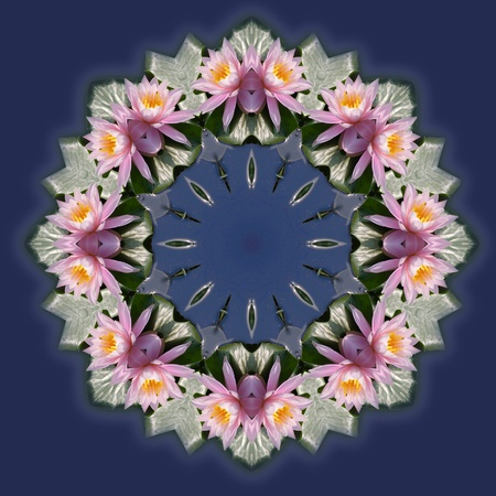 A fragile pink lily floating on a pond becomes a bright and delicate kaleidoscope pattern