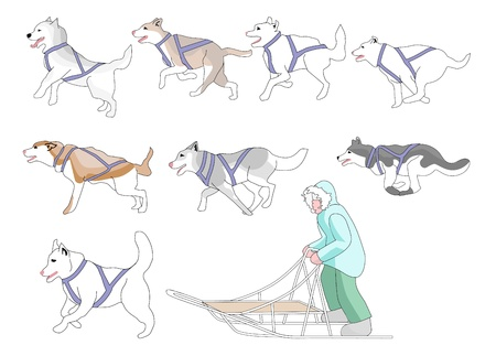 Musher and sled dogs mix n match full page  Vector