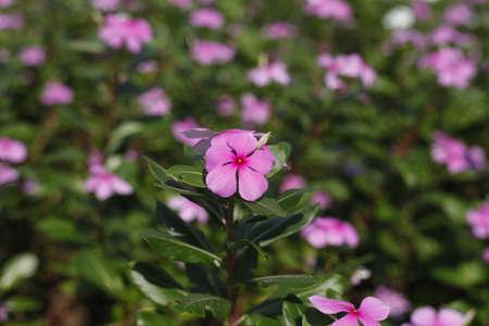 Flower Stock Photo - 17456682