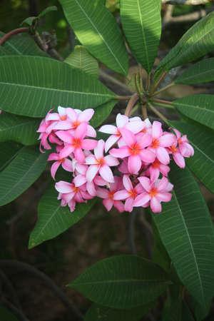 Flower Stock Photo - 17456692