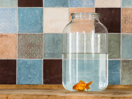 fluency: Goldfish in a big bottle Stock Photo
