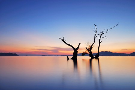 Back light water mangrove middle evening Stock Photo