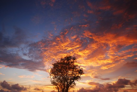 Silhouette of  trees with light in the evening Stock Photo - 7304685