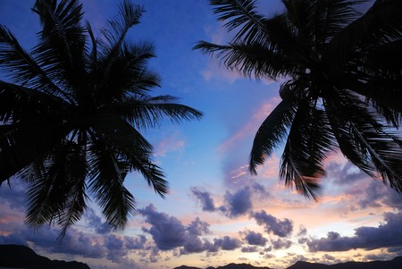 Silhouette of coconut trees with light in the evening Stock Photo - 7304680