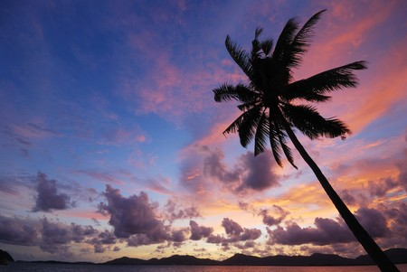 Silhouette of coconut trees with light in the evening. Stock Photo - 7304649