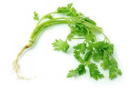 Celery is a vegetable smell and taste the dressing. photo
