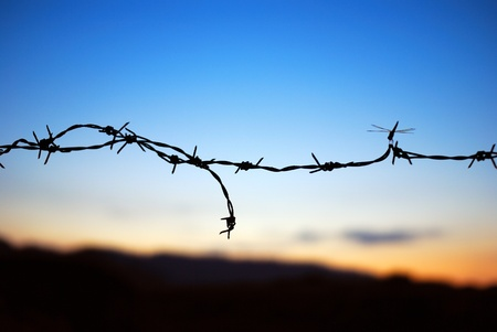 razor wire: Dragonfly in the barbed wire Stock Photo
