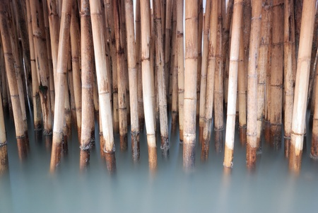 Old bamboo fence protect sandbank from sea wave photo