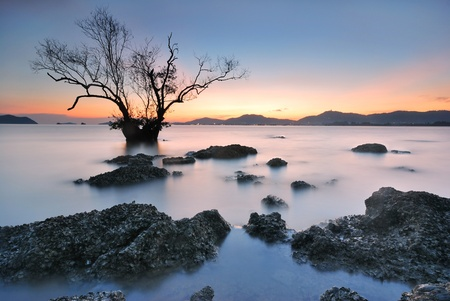 Mangrove trees and landscape sunset scene  Stock Photo - 17125171