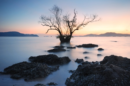 Mangrove trees and landscape sunset scene  photo