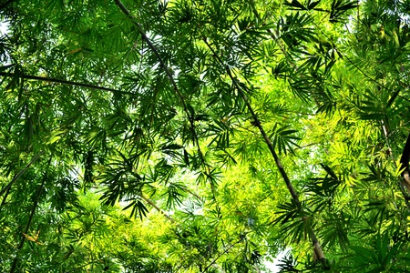 japones bambu: bosque de bamb� con sol de la ma�ana gloriosa