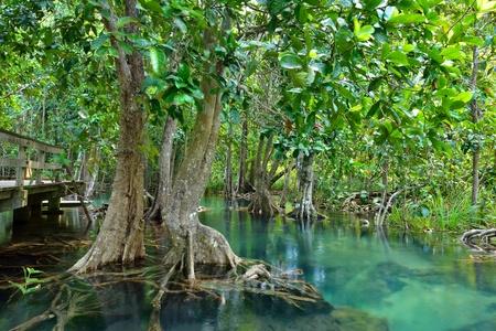 Mangrovebossen (moeras) met streamen Stockfoto
