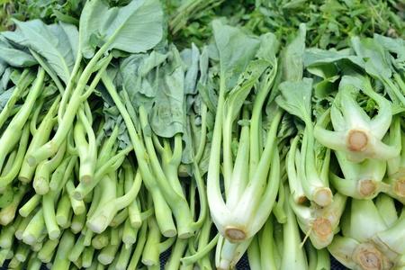 アブラナ 科 の 野菜
