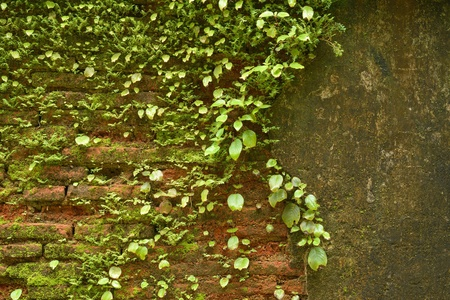 red brick wall with weeds and nettles growing up it photo