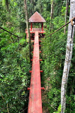 Bridge to the jungle,tropical forest , Southern of Thailand photo
