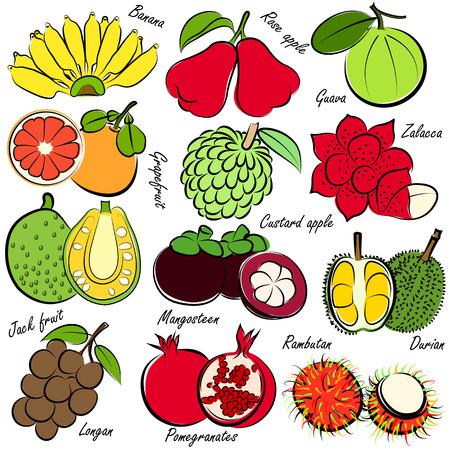 illustration of thai fruits set Vector