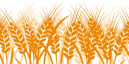 Wheat seamless pattern background vector ,illustration Vector