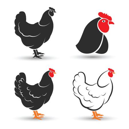 aves de corral: Pollo y gallo mano boceto dibujado en el fondo blanco, ilustración vectorial